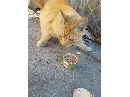 Found Pet #48792
