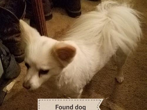 Found Pet #49041