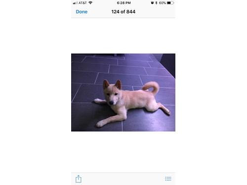 Lost Pet #91814