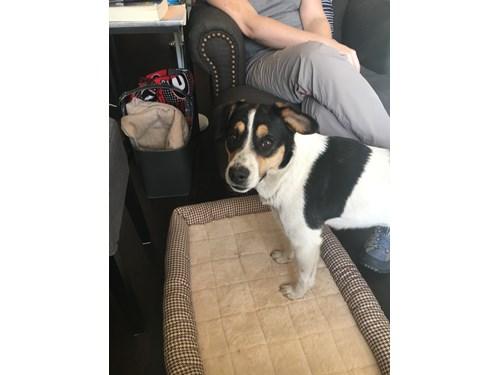 Found Pet #49401