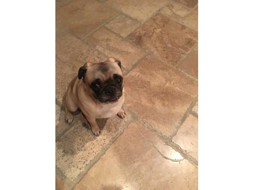 Found Pet #49423