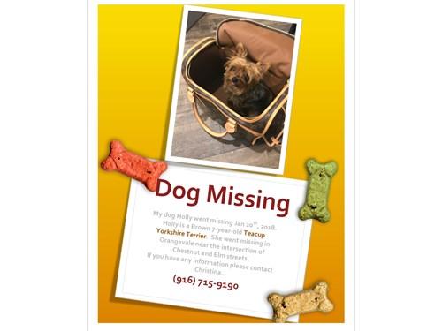 Lost Pet #92140