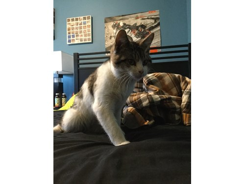 Found Pet #49746