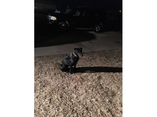 Found Pet #49756