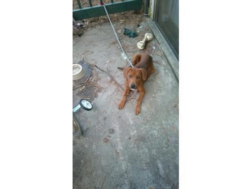 Found Pet #49764