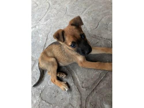 Found Pet #49765