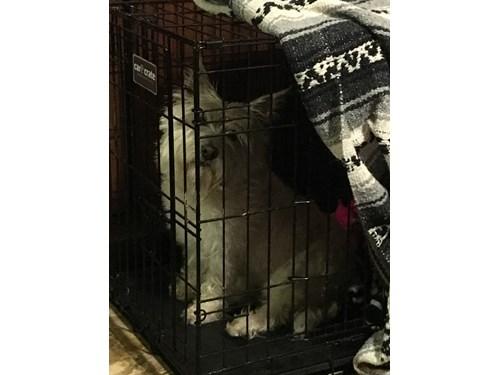 Found Pet #49963