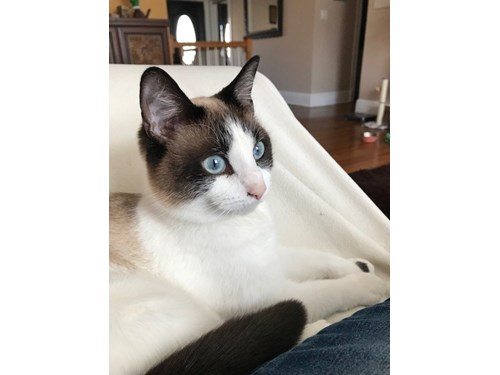 Lost Pet #93338