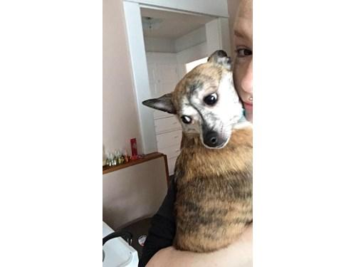 Lost Pet #93351