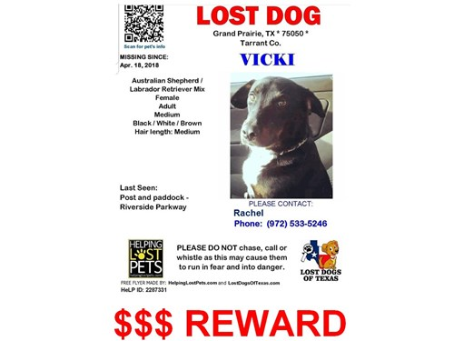 VICKI, a lost dog, is missing in grand prairie, TX 75050