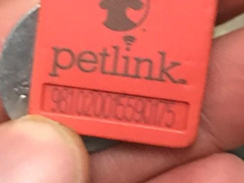 Found Pet #50779