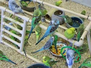 Available Birds for Sale - Petland Pet Store Columbus, Ohio