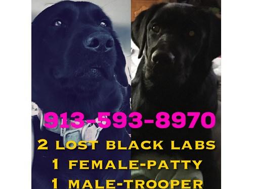 Found Pet #50785