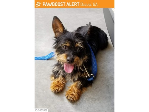 Found Pet #50787