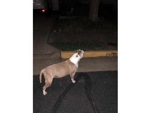 Found Pet #50793