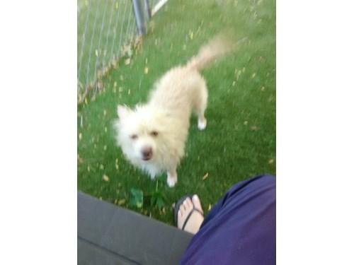 Lost Pet #95589