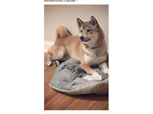 Lost Pet #95595