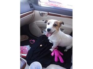 Lost Pets Near Lubbock, TX