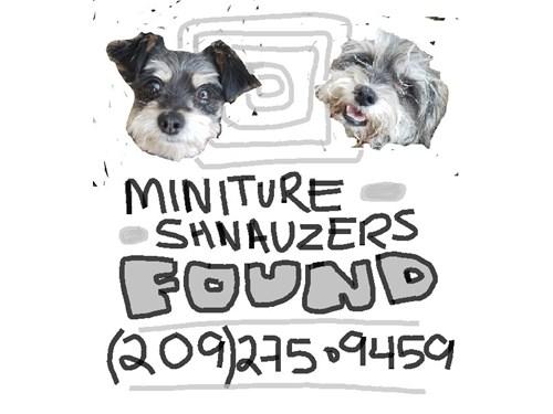 Found Pet #51131