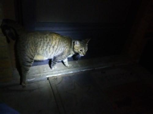 Found Pet #51135