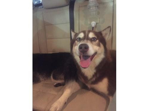 Found Pet #51167
