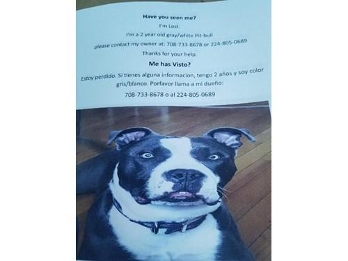 Found Pet #51181