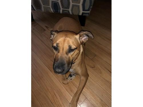 Lost Pet #96544