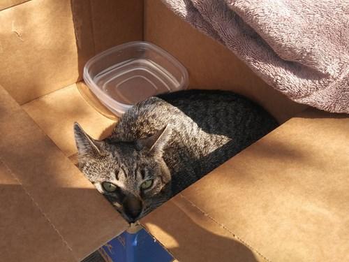 Found Pet #51556
