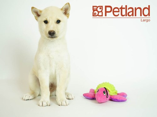 Lost Pet #100869