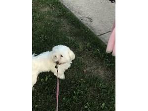 Lost Pets Near 60025 (Glenview, IL)