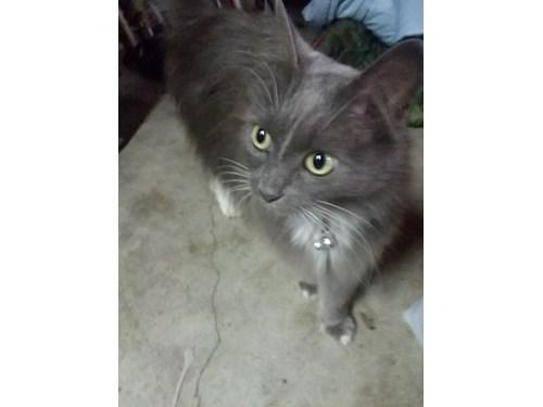 Found Pet #51815