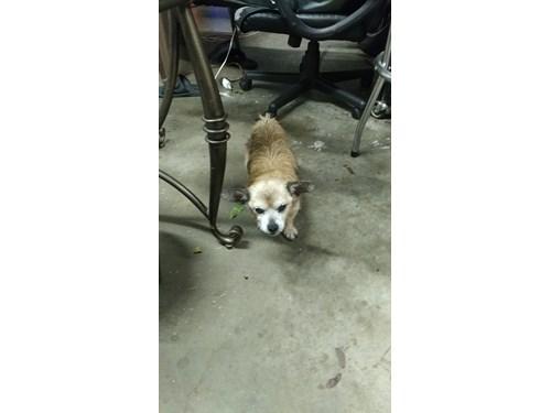 Found Pet #51837
