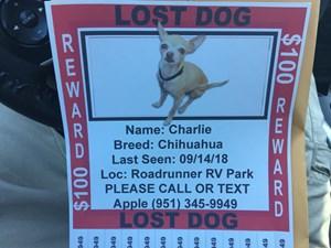 Lost Pets Near Lake Elsinore, CA