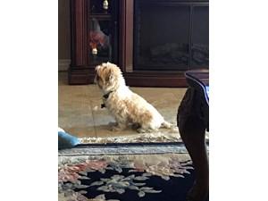 Lost Pets Near 85022 (Phoenix, AZ)