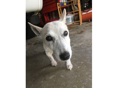 Lost Pet #98728