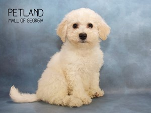 Dogs Puppies For Sale Petland Mall Of Georgia