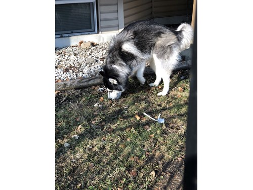 Lost Pet #99505