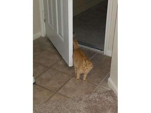 Found Pet #52413