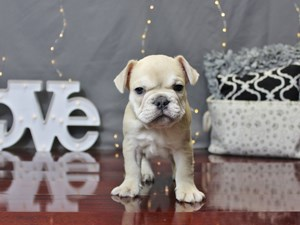 Dogs And Puppies For Sale In Ohio Petland Carriage Place