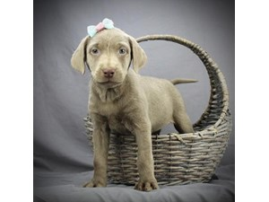Dogs And Puppies For Sale Petland Waterford Lakes Orlando Florida