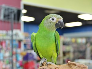 Available Birds for Sale - Petland Pet Store Columbus, Ohio