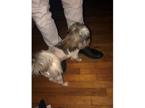 Lost Pet #108231