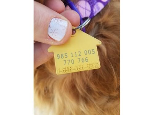 Found Pet #52870
