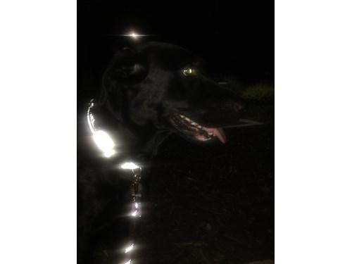 Found Pet #52882