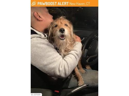 Found Pet #52884