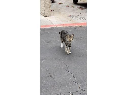 Found Pet #52887