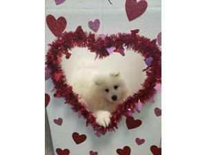 Dogs Puppies For Sale Visit Petland Pensacola Florida