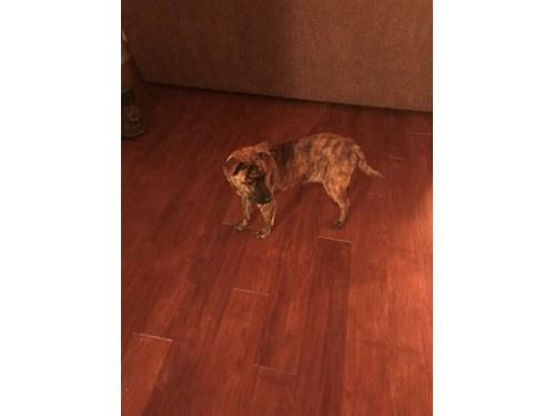 Lost Pet #100828