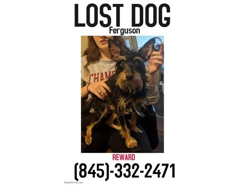 Found Pet #52914