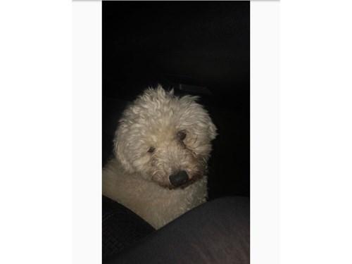 Found Pet #52926